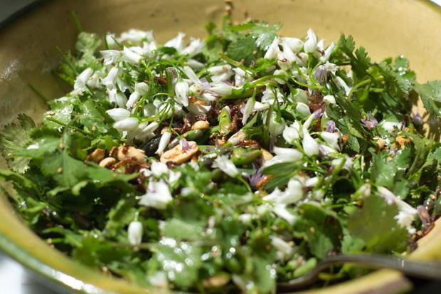Cilantro Salad Recipe
