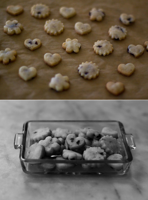 Olive Biscuit Cookies Recipe - 101 Cookbooks